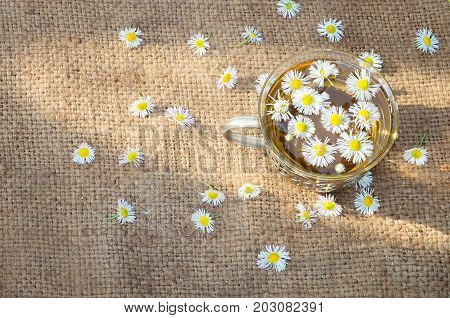 Chamomile tea on baggy cloth morning sunbeam. Scattered flowers.