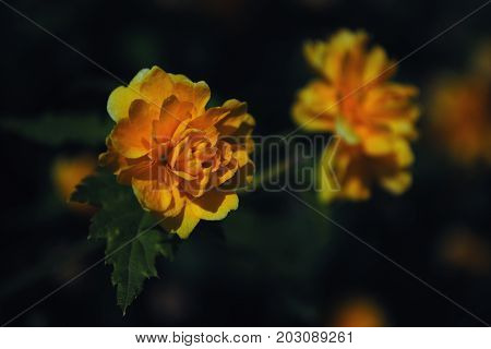 flower flower, nature, yellow, orange, garden, flowers, marigold, plant, green, macro, spring, summer, bloom, rose, flora, blossom, red, floral, beauty, petal, tagetes, closeup, bright, marigolds