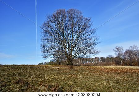 Autumn Landscape With A Lonely Tree On A Decline