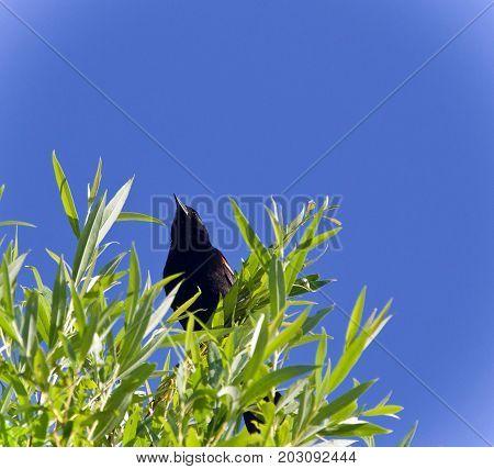 Beautiful Isolated Photo Of A Blackbird Sitting