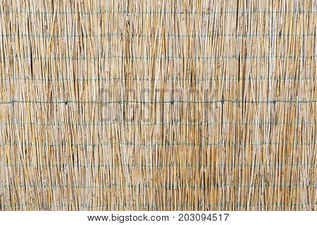 The texture of the dry reeds. Yellow reeds. A fence made of reeds. Dry grass.