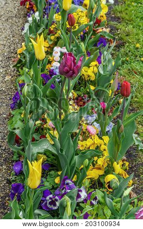 Flowerbed with different flowers in park Bayreuth Germany