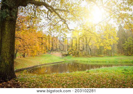 Oak Branch Of An Oak Tree Over A Lake In An Autumn Park