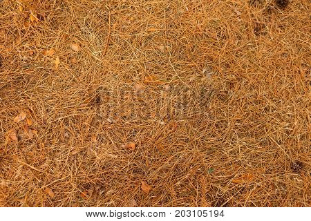 Macro of a yellow or light orange, dry, natural, old grass background. Textured autumn grass close-up. Agriculture, nature, prairie, grassland, lawn, fields concept Copy space