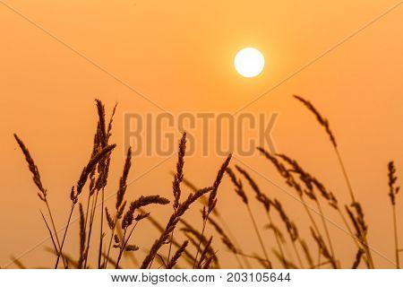 sun and weeds with orange yellow tones