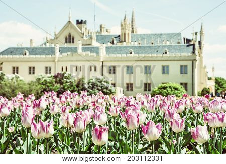 Majestic Lednice castle with flowering tulips southern Moravia Czech republic. Travel destination. Beautiful place. Yellow photo filter.