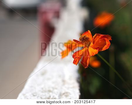 flower, red, nature, orange, plant, flowers, green, garden, flora, bloom, spring, summer, blossom, pink, floral, beauty, leaf, petal, color, macro, season, rose, colorful, bright, blooming