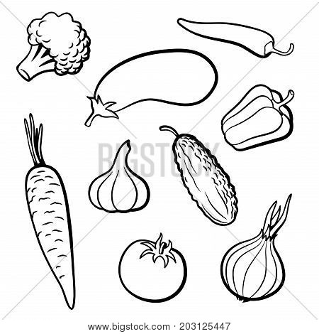 Set of outline vector vegetables. Broccoli eggplant hot chili pepper carrot garlic cucumber tomato onion and sweet pepper