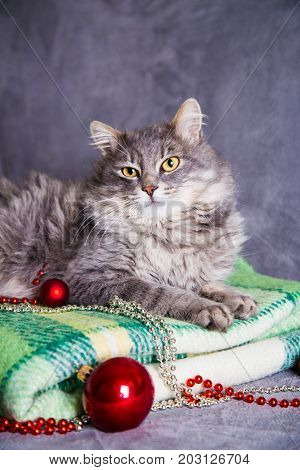 Cute Furry Home Cat With Christmas Balls And Beads On Green Plaid