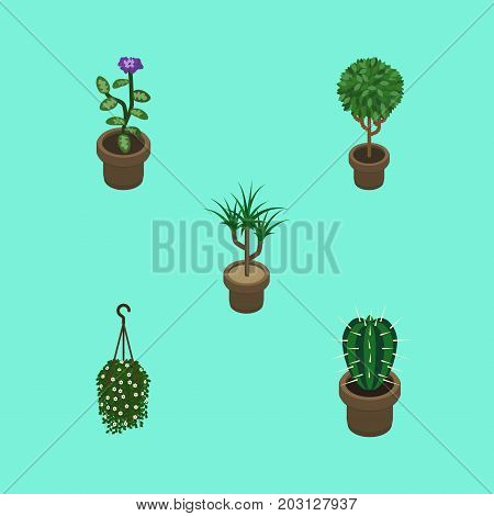 Isometric Flower Set Of Peyote, Blossom, Houseplant And Other Vector Objects
