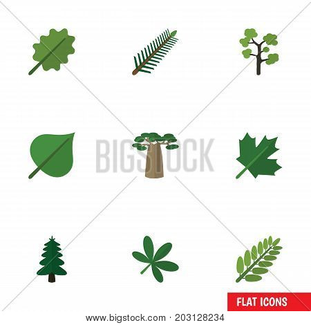 Flat Icon Nature Set Of Park, Spruce Leaves, Hickory And Other Vector Objects