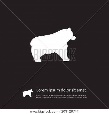 Polar Vector Element Can Be Used For Bear, Panda, Animal Design Concept.  Isolated Bear Icon.
