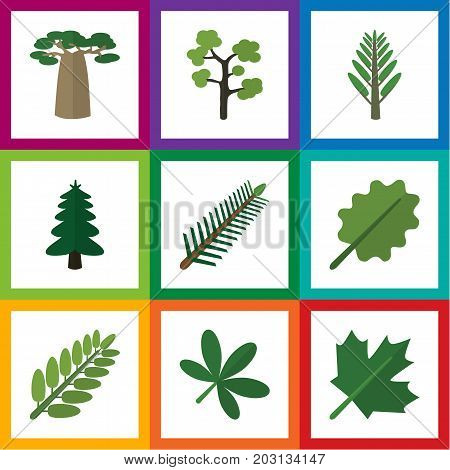Flat Icon Bio Set Of Leaves, Spruce Leaves, Alder And Other Vector Objects