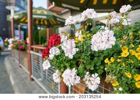 KALININGRAD, RUSSIA - CIRCA AUGUST, 2017: flowers at McDonald's restaurant. McDonald's is an American hamburger and fast food restaurant chain.