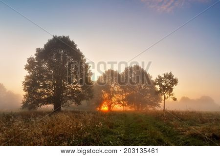 Picturesque Autumn Landscape Misty Dawn In An Oak Grove On The Meadow
