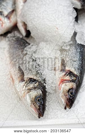 Bream fish in ice on fish market
