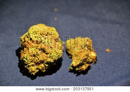 Gucci OG is a high thc indica strain used for medicinal purposes poster