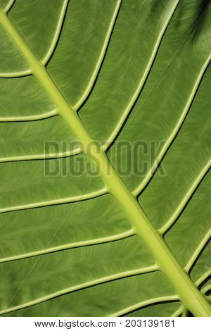 A tropical leaf green background texture with copy space