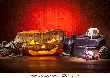 Dry pumpkin cat skull on old books dry rose crow quill on red old wooden background. Vintage witchcraft still life.
