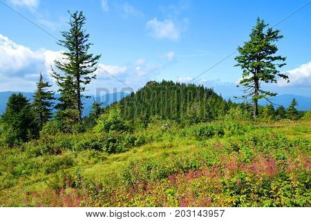 Summer landscape with mountain Klein Osser in National park Bavarian forest, Germany.