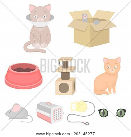 Cat equipment set icons in cartoon style. Big collection of cat equipment vector symbol stock