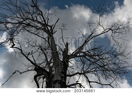 looking up at white clouds and blue sky through the bare branches of a tree on a cool afternoon