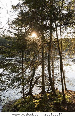 Morning Sun Bursting Through A Grove Of Trees Next To A Beaver Pond - Ontario, Canada