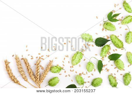 hop cones with ears of wheat isolated on white background close-up. Top view.