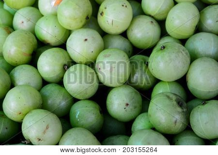 Indian gooseberry Emblic, cane, sugar, sugarcane, juice, fresh, white, plant, background, food, drink, sweet, industry, isolated, agriculture, raw, stem, cut, green, nature, wooden, texture, closeup, healthy, natural, leaf, brown, grass, tropical, fiber,