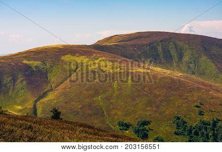 Grassy Hillside Of Mountain In Summer