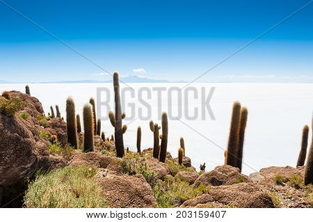 Cactus On Incahuasi Island, Salar De Uyuni, Bolivia