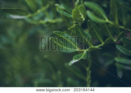 Green abstract leaves texture and background. Texture of green little leaves. Close up view of green leaves. Green abstract texture and background for designers.