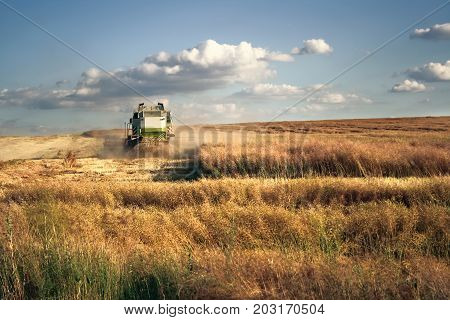 Combine harvester on the wheat field harvesting