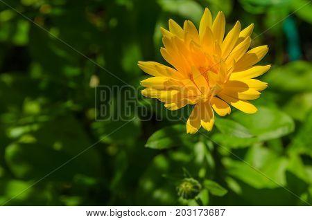 Flower Vibrant Background