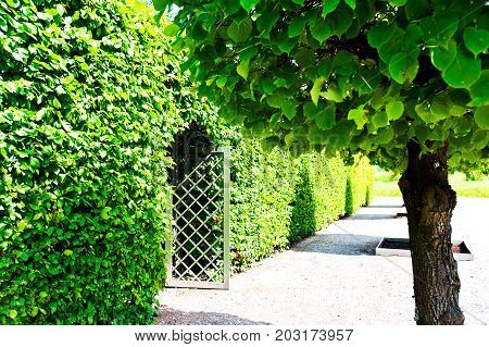 Ancient wooden grate gate in green trees hedge around with ornamental garden beyond in Latvian Rundale park. Vibrant summertime outdoors horizontal image image.