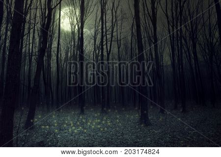 Moon light in darkness autumn forest. Halloween background