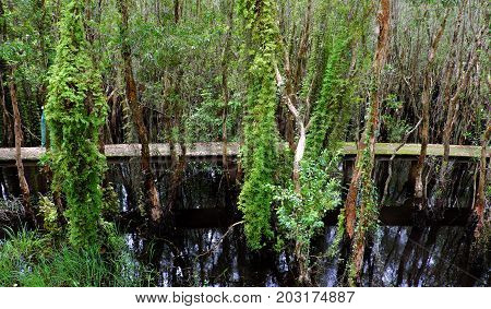 Eco Green, Walkway Through Forest