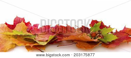 Colorful background of autumn leaves and rosehip berries. Abstract background of autumn leaves. Autumn background.