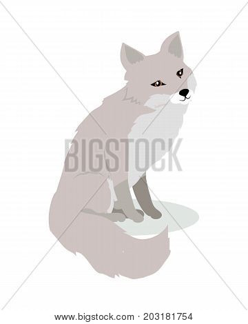 Fox cartoon character. Cute fox flat vector isolated on white background. North America and Eurasia fauna. Fox icon. Animal illustration for zoo ad, nature concept, children book illustrating
