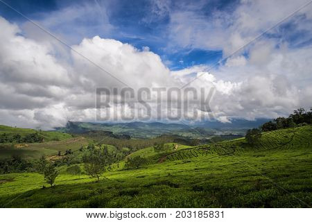 Wide Spreaded Tea Plantations, Panoramic View To Hills Covered With Tea Bushes, Bandung, West Java,