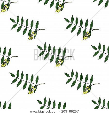 Neem, nimtree, medicinal plant. Ayurvedic Herb. Hand draw ink design for essential oil, cosmetics, treatment, aromatherapy, homeopathy. For print textile wallpaper surface wrapping decoupage
