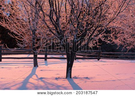 Winter landscape with hoarfrost on trees. Morning light of the rising sun. Garden in the mountain village