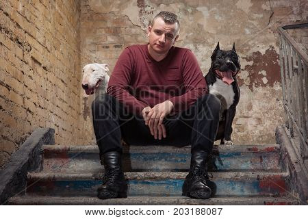 brutal caucasian adult man in red sweater or pullover sitting on stone stairs with serious face against background of a peeling wall. Dog Trainer. Dogs: black pit bull or stafforshire terrier white bull terrier sitting on each side of a man. Studio shoot.
