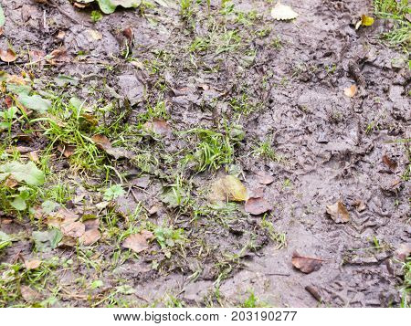 Wet Muddy Floor Outside On Path In The Forest