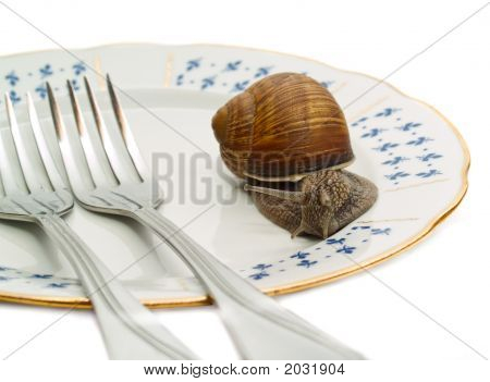 Snail And Plate On White