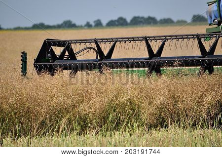 Yahilnytsia - Chortkiv - Ukraine - July 13 2016. Collection of winter rape using the powerful combine harvester in the agricultural sector