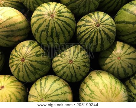 Beautiful Image Of a Pile of freshly Harvested Watermelon