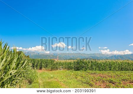 Agricultural landscape. Field of corn , mountains, blue sky and clouds.
