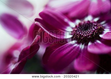 pink flowers, shallow  focus