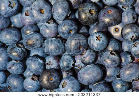 a bunch of fresh blueberries bilberries whortleberries